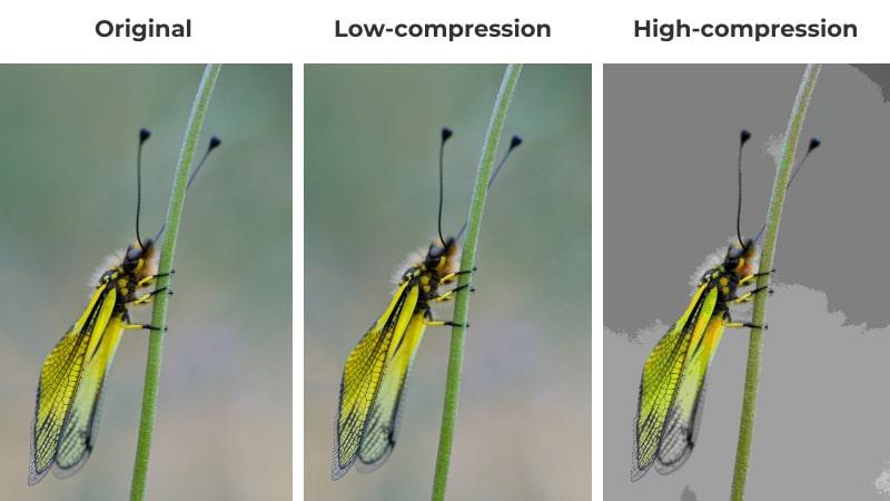 original image vs low compression vs high compression